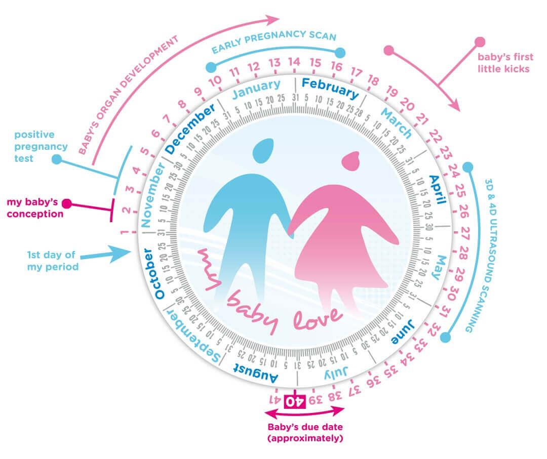 3D & 4D Baby Scans Gestation Wheel